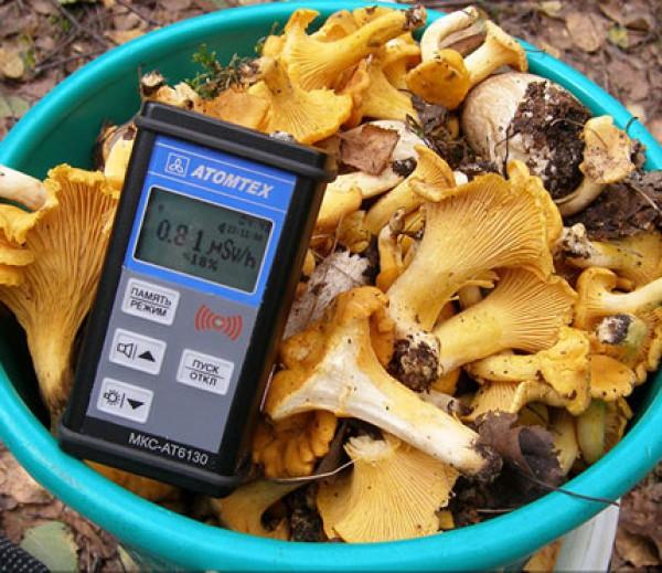 Радиоактивные беларуские грибы обнаружены во Франции